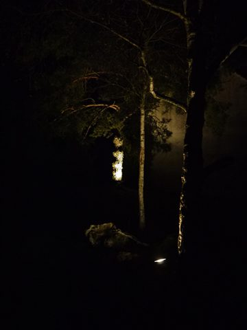 Eclairage arbre